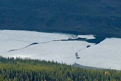 Ice-Fields Adrift (MIKOFOX  Catching Up!) Tags: lake canada ice forest landscape spring may yukon cracks spruce xt1 bigfoxlake fujifilmxt1 xf18135mmf3556rlmoiswr screwtheautotagbot mikofox