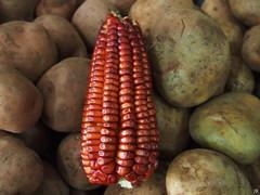 maiz morado firmado (johannarosbeck) Tags: stilllife verduras rojo bodegon maz stileben