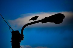 No longer day but not yet night (James_D_Images) Tags: blue sunset cloud bird silhouette twilight dusk streetlamp wires hour crow utilitypole