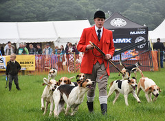 Master and the Hounds (littlestschnauzer) Tags: fox hounds hunt hunting pack master red coat whip honley show agricultural huddersfield west yorkshire uk rural pursuits countryside hound june 2016 ring arena