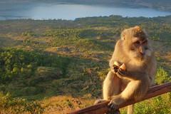DSC02508 (Peripatete) Tags: bali mountains nature sunrise landscape volcano mount monkeys batur