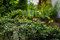 20160626-AA-0503 (andreas.abzieher) Tags: nature canon bokeh wideangle canon6d canonef24mmf14liiusm