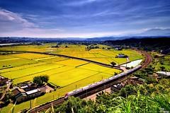 (Clonedbird  & Iris ) Tags:         train railway rice ricefield nikon d810 taiwan