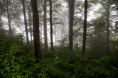 ~ rainy day ~ (SteffPicture) Tags: rain fog forest canon nebel grn wald regen nass canoneos5dmarkiii 5dmarkiii steffpicture