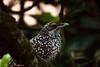 IMG_6854L4 (Sharad Medhavi) Tags: bird canonef100400mmf4556lisusm canoneod50d birdsandbeesoflakeshorehomes