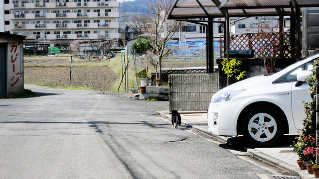 Today's Cat@2012-03-24