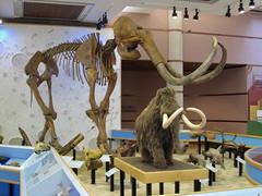 Hebior Mammoth and Mammoth Model (Piedmont Fossil) Tags: museum skeleton mammal fossil iowa paleontology mammoth historical bone geology desmoines pleistocene