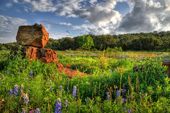 Texas Wildflowers in Burnet, Texas (Ronnie Wiggin) Tags: flowers trees sunset usa nature clouds sunrise fence landscape spring nikon gate rocks texas country boulder wildflowers bluebonnets springtime fenceline d300 bloomingflowers texasbluebonnets nikond300 rwigginphotos ronniewiggin ronniewiggin