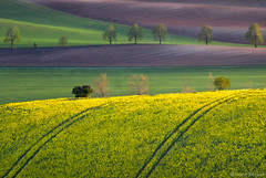 Dream  Land (Irene Becker) Tags: flowers lines yellow landscape spring europe sundown wind patterns soil land czechrepublic cz agriculture curve skalka moravia morava colza eskrepublika repce eskrepublika jihomoravsk saariysqualitypictures irenebecker irenebeckerorg soilpatterns
