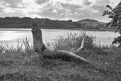 Driftwood sculpture 02 (JmGpHoToS) Tags: scotland kipford