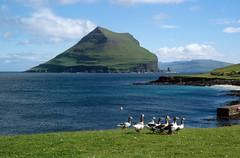 Beautiful day in Koltur (supersky77) Tags: ocean goose atlantic faroe oceano oca atlantico oche isole hestur froyar geeze frerne koltur frer