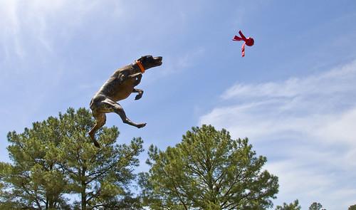 It's a bird, it's a plane... it's SUPER Bailey!