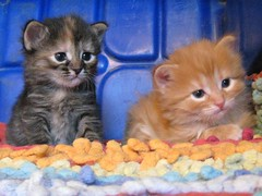 Lucky & Zippy (elycefeliz) Tags: cats kittens gatos lucky zippy katzen