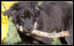 Sticks are the best (savabonita) Tags: sticks moqui