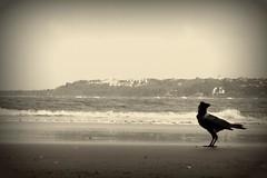 Don of Miramar... (Dharmesh Thakker) Tags: summer india holiday beach canon bay sand goa monsoon miramar panaji 60d dharmesh84
