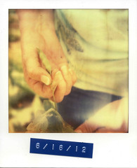 Peas In a Pod (Caleb Jenkins) Tags: old plant color colour film june analog vintage garden polaroid sx70 spring hands gardening farm framed label farming border grow nostalgia growth frame dating peas instant series produce growing analogue date sequence pea instantcamera sustainable peapod landcamera peasinapod vegetablegarden imposible polaroidsx70 warmcolors filmphotography polaroidlandcamera subsistence peapods instantfilm photoseries polaroidphotography polaroidframe polaroidsx70landcamera livingofftheland subsistencefarming polaroidborder px70 colorfilmphotography pickingpeas producefarm instantfilmphotography impossibleproject labeing impossiblefilm impossibleprojectfilm coolfilm px70coolfilm subsistencefarm impossibleprojectpx70cool