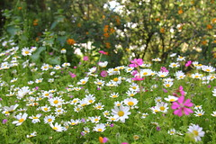 Spring / Frhling ( Philipp Hamedl) Tags: pink flowers red white green yellow spring meadow wiese blume frhling