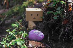 Easter hunt pt. 1 (siljevdm) Tags: nature forest easter natural egg adventure explore hunt danbo danboard danbosadventure