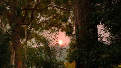 control burn-off sunset (christinemargaretlynch) Tags: sunset haze hazelbrook burnoff contro