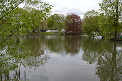 Calm lake in Washington Park during the Albany Tulip Festival in the capital city of Albany, New York, USA (RYANISLAND) Tags: flowers flower spring tulips 17thcentury nederland upstateny na tulip albany empirestate newyorkstate albanyny nederlands springflowers tulipfestival albanynewyork iloveny flowerfestival springflower tulipflower newamsterdam ilovenewyork tulipflowers theempirestate albanytulipfestival kingdomofthenetherlands dutchsettlement ny flower flowers spring newyork nyc springtime newyorkcity ilovenewyorkspringdestination albanyny albanynewyork albanytulipfestival tulipfestival tulips dutchtulips upstatenewyork nys springflowers orangewonder orangewondertulip queenwilhelmina holland thenetherlands netherlands dutch welcomespring tulip