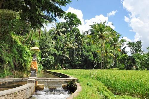 bali nord - indonesie 30