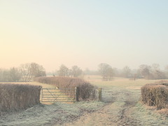 Which Gate This Morning . . . ?      (explored) (creditflats) Tags: uk morning trees england english field pen fence landscape dawn golden march spring gate frost path walk farm country olympus route pasture choice choose ep5