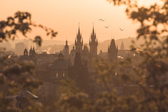The Golden City (One_Penny) Tags: city morning travel trees light sky urban sun sunlight church nature colors leaves birds animals skyline architecture buildings photography dawn town warm cityscape prague towers prag praha tschechien spire frame czechrepublic tones tynchurch churchofourladybeforetn canon6d zlatpraha