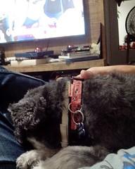 S no dengo. #pet #instapet #dog #intadog #dengo (NelsonBritoJr) Tags: ifttt instagram nelson brito jr   fotografia pet cachorro co srd companheiro