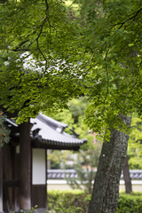 Shinryoku  (PV9007 Photography) Tags: new summer green japan temple spring kyoto sommer zen    gion grn kansai  oldest  tempel frhling   higashiyama   kenninji  rinzai  ltester shinryoku    rinzaishu aomomiji