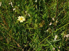 DSCN1532 (mjbarz) Tags: summer nature illinois hike trail westdundee carpentersville 2016 racewaywoods