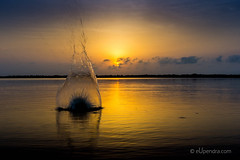 IMG_4218.jpg (Upendra...) Tags: morning orange nature water yellow sunrise splash