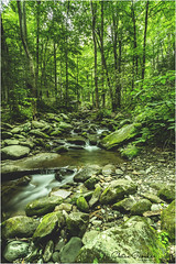 Stream (cmgaonkar) Tags: nationalpark nationalparktraveller greatsmokymountains smokies nature tennessee travel travelphotography trail stream water forest longexposure indianphotographers photostacking roaringfork gatlinburg
