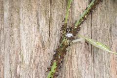 ant farm (severalsnakes) Tags: animal bug insect polaroid pentax ant vine led missouri ringflash ks2 ringlight sedalia raynox250 m2828 saraspaedy