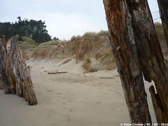 P1190372_a (O Suave Gigante) Tags: estuary wexford coastalerosion wexfordharbour curracloe hookpeninsula hookheadlighthouse ballinesker sladeharbour northslob sladecastle ravenwoodnaturereserve theravennaturereserve ravenpointloop laffanfamily 1860sfaminereliefworksprogramme