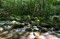 Natur - Great Smoky Mountain (Conny242) Tags: usa nature water stones tennessee natur steine bach gatlinburg