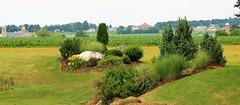 IMG_3778 (joyannmadd) Tags: amish horses intercourse pennsylvania kitchenkettlevillage farm animals lancaster coumty pa farms nature outdoors
