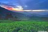 Sunrise (HDR) (2121studio) Tags: cameronhighlands sgpalasteaplantation