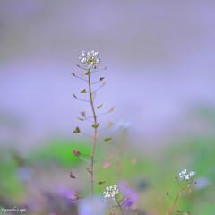 Show signs of spring (YORIKO'S EYE) Tags: color bestcapturesaoi elitegalleryaoi asquaresuperstarstemple