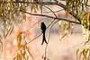 IMG_7299L4 (Sharad Medhavi) Tags: bird canoneod50d birdsandbeesoflakeshorehomes
