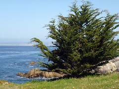 Pacific Grove 5-7-12 (20) (Photo Nut 2011) Tags: pacificgrove california monterey berwickpark
