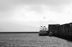 Wanting their share. (Jamie McCaffrey) Tags: sanfrancisco california blackandwhite boat dock ship seagull fishermanswharf pier45