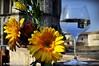 Un glop de Girona (Perikolo) Tags: girona gerbera copa glop trago tempsdeflors enunllocalarosadelsvents santperedegalligants