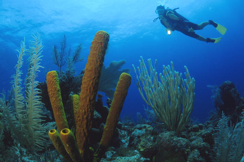 Diving Belize