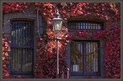 Bluestone & vine in Autumn (fotograf1v2) Tags: autumn windows light heritage lamp architecture geotagged vine australia melbourne victoria historical creeper 1850s bluestone stkildaroad lampposts australianarmy barredwindows nationaltrustbuilding victoriabarracks armybarracks geo:lat=3782745449458421 geo:lon=1449708998895493