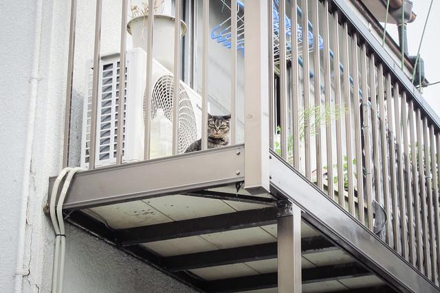 Today's Cat@2012-06-02