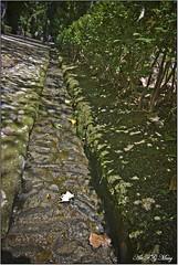 Agua  que fluye en la Alhambra (Art.Mary) Tags: españa verde green water forest canon andalucía spain agua eau vert alhambra granada forêt bosquedelaalhambra