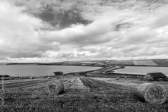 Burray (joeri-c) Tags: uk sea bw cloud water monochrome landscape bay scotland orkney farming champs nikkor foin écosse baleofhay orkneyislands burray orcades d5000 1685mm blackwhitenikon echnaloch