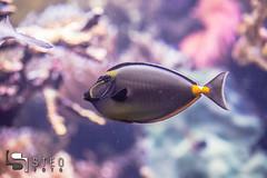 5D__5471 (Steofoto) Tags: genova porto pesci acquario darsena crostacei rettili cetacei molluschi