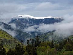 Carpathian Mountains /  (R_Ivanova) Tags: sky cloud mist mountain snow color tree nature colors clouds forest landscape spring    karpati fujifilmfinepix karpaty     rivanova