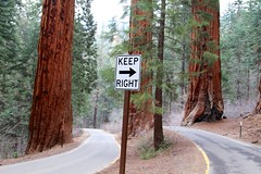 Keep Right on the road (daveynin) Tags: road sign forest way nps right sequoia